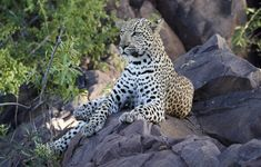 African Safari, Family Holiday, Tanzania, Conservation, Panther, South Africa, Animals, Animales, Animaux
