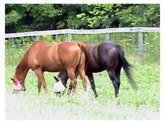 8 Ways to Help Your Horse Achieve His Highest Potential