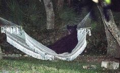 A black bear lies on a hammock in a residential back yard in Daytona Beach, Florida, on May 30, 2014. The bear used the hammock for more than 15 minutes before being startled when the back yard lights were turned on according to the photographer. (Reuters/Rafael C. Torres)