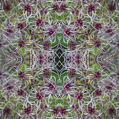 #Herbst #verblühen #Farben #Skulptur #Natur #Symmetrie #Wiederholung #Muster