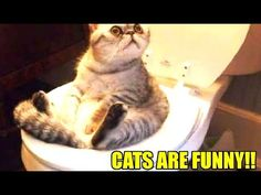 Cute animals funny animals funny videos cats and dogs funny cats funny dogs cute cats cute dogs cats meowing cats fighting. Funny Cat Compilation, Funny Cat Memes, Funny Cat Videos, Funny Animal Pictures, Funny Dogs, Fun Funny, Daily Funny, Kitten Videos, Animal Jokes