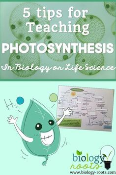 5 tips for teaching photosynthesis in biology or life science class- can use these items as check ins for student understanding and to help you teach photosynthesis most effectively! Biology Classroom, Teaching Biology, Science Biology, Science Experiments Kids, Science Lessons, Science Education, Science For Kids, Science Activities, Life Science