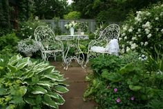 a white garden - beautiful