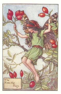 The Rose Hip Fairy from 'Flower Fairies of the Autumn' 1926 by Cicely Mary Barker - PRINT. $5.95, via Etsy.