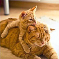 Tabby & kitten