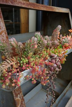 Rustic, Junk style, Junk elegance, rainbow gradation color succulent, Shabby Chic, Kyoto Antiques HANAMIZUKI