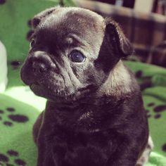 Baby Arthur at 4 weeks