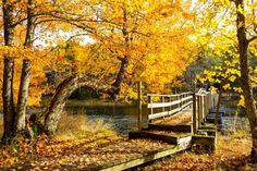 Why do leaves change color in Autumn? - Barrett & MacKay/All Canada