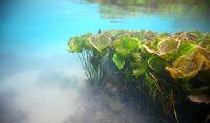 Lake Matano. Sulawesi, Indonesia.