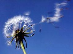 """""""Vi arriva il poeta e poi torna alla luce con i suoi canti e li disperde  Di questa poesia mi resta quel nulla d'inesauribile segreto"""" (Giuseppe Ungaretti, """"Il porto sepolto"""")  Gli splendidi versi del Grande Poeta, Giuseppe Ungaretti, per sempre si disperdevano nel cielo il 1° giugno 1970. Ma, la sua immortale Poesia, sarà con Noi per sempre!  Una Felice e poetica giornata, piena di fiori del nuovo mese, a Tutti… #PoesiaèVita!  (http://www.imieilibri.it - https://twitter.com/PoesiaeVita)"""