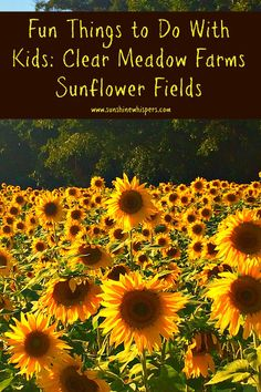 Clear Meadow Farms Sunflower Fields: Fun Things to Do With Kids in Maryland - Sunshine Whispers  http://www.sunshinewhispers.com/2015/09/clear-meadow-farms-sunflower-fields-fun-things-to-do-with-kids-in-maryland/