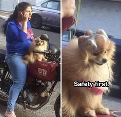 Top 28 Funny Animal Memes Of The Day
