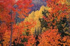Colorado mountains in the fall! I bet it would be pretty to visit.... In a travel trailer!!!