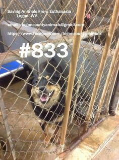 URGENT! Please share and give them a second chance. Not much time left for them!
