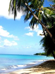 Barbados beach. And the people were just as interesting to talk to as the beach is beautiful!