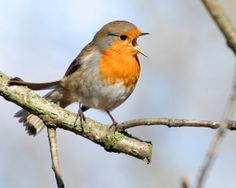 """""""The Woods would be very silent if no birds sang except those that sang best.""""  ~ Henry Van Dyke"""