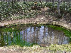 池(いけ): pond