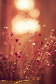 Pretty in pink #bokeh #photography