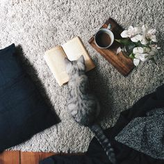 Pets, Books, and Coffee that's all I need on the weekends. Crazy Cat Lady, Crazy Cats, Baby Animals, Cute Animals, Coffee And Books, Cat Photography, Book Aesthetic, Beautiful Cats, Cat Love