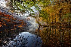 Dance of the leaves.. by Samet Güler on 500px