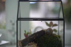 snail terrarium Terrarium Containers, Terrarium Ideas, Planter Ideas, Glass Terrarium, Terrariums, Small Potted Plants, Air Plants, Snails In Garden, Pressed Leaves