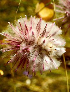foto tratta da: http://wald.heim.at