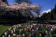Rose Garden in Stanley Park. Vancouver, British Columbia, Canada