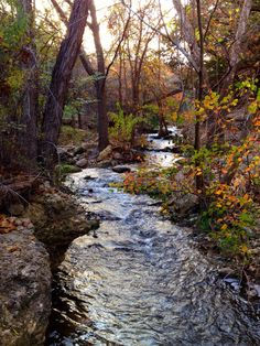 {Lakeway, Texas} Yet again this place leaves me in awe. Hidden trails are in this area of Lake Travis and I came across this view of a small creek. Such beauty. Lake Travis Austin, Austin Texas, Lakeway Texas, Cypress Hill, Living Water, Terrariums, Just Go, Places To See, Trail