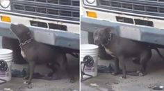 Dog chained to a car on a very tight leash for days by New York owner! Act Now! | YouSignAnimals.org