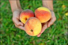 shot of a handful of peaches