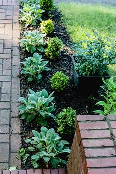 lamb's ear and dwarf boxwoods. Along the Front