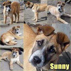 Örökbefogadásra váró kutya, Sunny