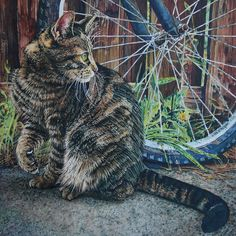 Quiet Paws by Face-Reality on DeviantArt Watercolor Cat, Watercolor Animals, Animal Paintings, Animal Drawings, Kitty Images, Street Art Photography, Cat Sketch, Illustrations, Cat Drawing
