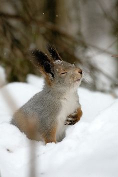 He is really enjoying the snow.