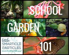 School Garden 101 -  second in a series of articles about establishing a school garden!