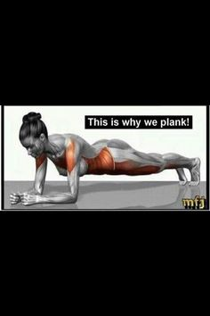 The plank pose is one of the fundamental poses to strengthen your core muscles. It sets the all-important stability foundation for your spine and pelvis. Without this foundation you risk low back pain or injury. Front plank holds are a great beginner movement to train pelvic stability. Perform them on both your forearms or hands