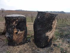 Massive charred logs - they must weigh over one tonne each, so I guess the farmer tried to burn them - they just got a bit singed