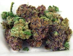 Purple Haze x Sour Diesel