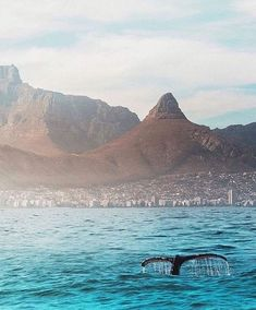 Lions head and whale tail Cape Town South Africa Most Beautiful Cities, Wonderful Places, Destinations, Cape Town South Africa, African Beauty, Africa Travel, Scenery, Images, City
