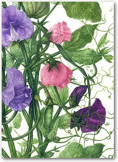 "sweetpeas Crafter/'s Workshop plantilla 6/""x6/"""