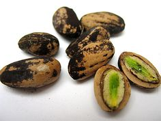 How to Harvest Pine Nuts - store in a sealed container in the fridge or freezer.