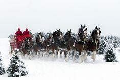 Budweiser Clydesdales In Snow | budweiser-clydesdales-in-snow.jpg
