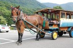 那須塩原温泉に行くならトテ馬車に乗ってみませんか トテ馬車は明治の中頃から塩原の交通機関として活躍していた馬車です ゆったりと優雅な気分で名所巡りができるのでおすすめですよ(_)v  tags[栃木県]