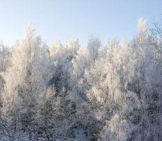 Ihana valo - voi mikä päivä  #talvi #winter #snow #seasonsoffinland #luonto #nature #naturelover #natureoffinland #winterwonderland #light #visitfinland #lifestyleblogger #nelkytplusblogit #åblogit #ladyofthemess