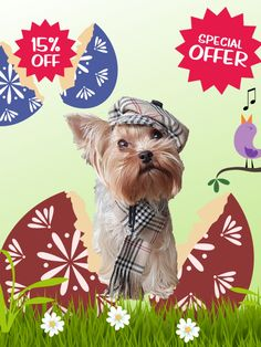 Happy Easter! Special offer in the shop -15% sale. Happy shopping😀🐾🥳 #smalldogfashion #smalldoglife #dogclothing #sewingpattern #fordog #dogdress #dogcoat #doghats #eastersale2021 Small Dog Breeds, Small Dogs, Dog Clothes Patterns, Sewing Patterns, Pet Dogs, Pets, Small Dog Clothes, Easter Sale, Dog Dresses