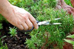 Die heilende Wirkung von Gewürzen und Pflanzen - Gesundheit – | ||| | || CODECHECK.INFO