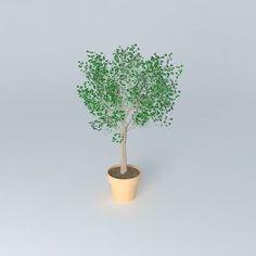 Terracotta vase with tree