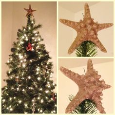 My DIY starfish christmas tree topper -- it's a real starfish covered in glitter with a PVC pipe backing to hold it on top of the tree.     Beach Christmas, Coastal Christmas, Nautical Christmas