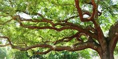 ArborDay.com: inexpensive trees along with helping to plant more trees!
