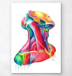Cervical Muscle Anatomy art – watercolor splash – Codex Anatomicus Source by valeriacarbotti Human Anatomy Art, Anatomy Drawing, Neck Drawing, Medical Illustration, Illustration Art, Neck Muscle Anatomy, Art Sketches, Art Drawings, Illustrations Médicales